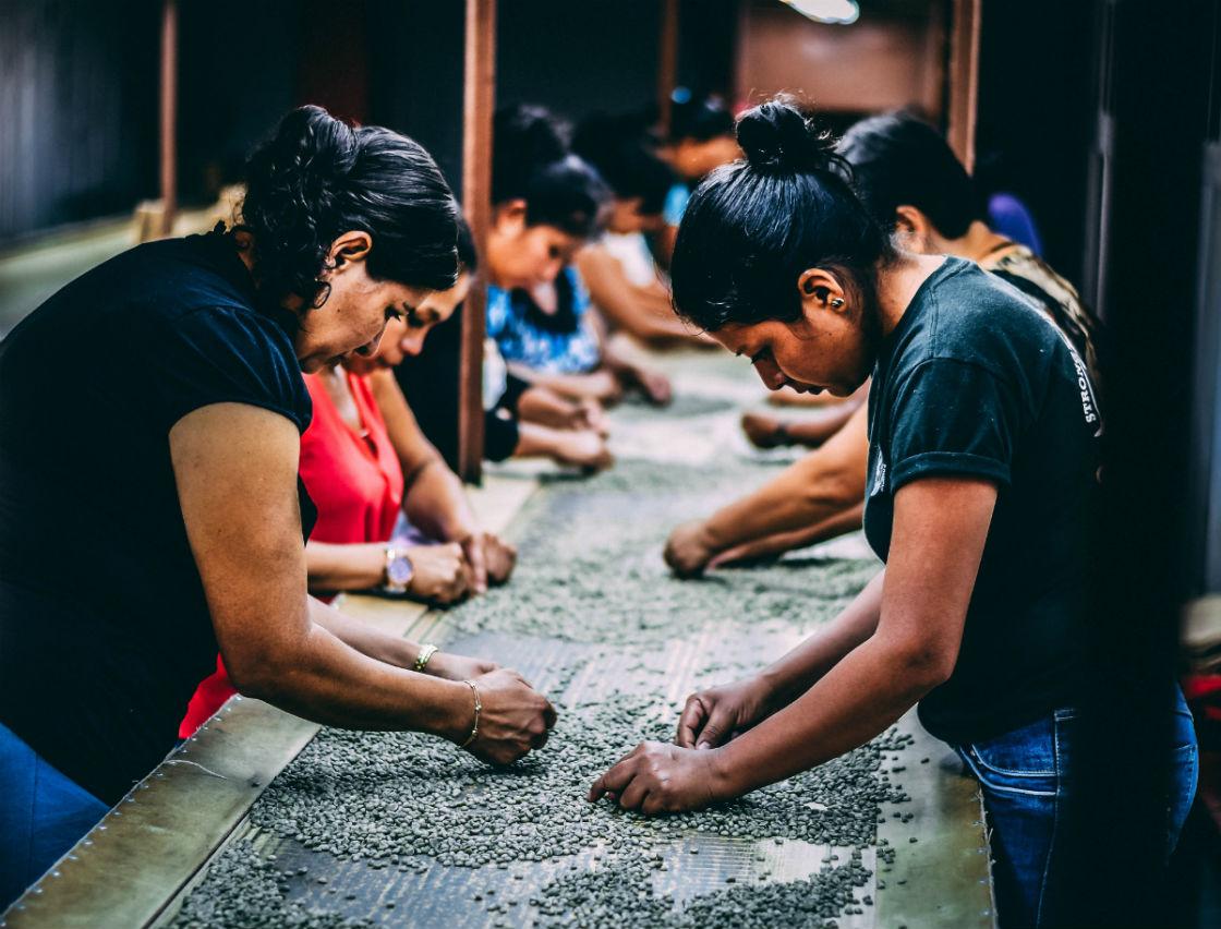 Women picking beans in El Salvador.